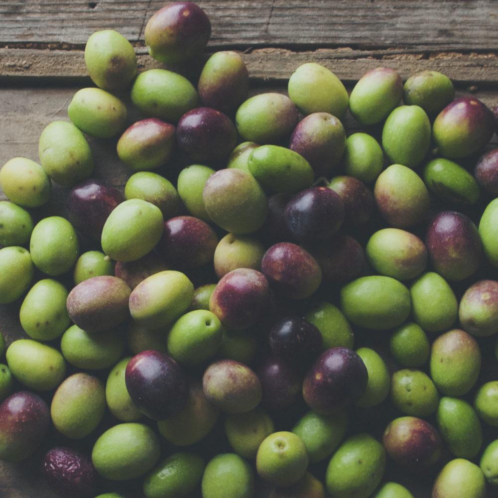 Le olive da cui è ottenuto l'olio extra vergine di oliva COLIO@ appartengono a specie autocnone dell'Umbria