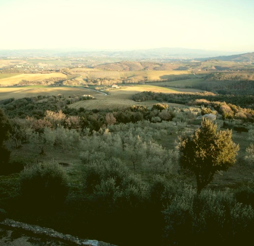 Una vista mozzafiato sulla valle umbra con gli ulivi dell'Azienda Agricola Augusto Coli